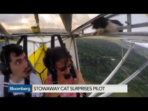 Yes, This is Video of a Flying Cat