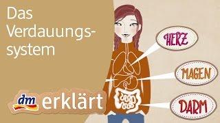dm erklärt: Das Verdauungssystem - Wie funktioniert die Verdauung des Menschen?