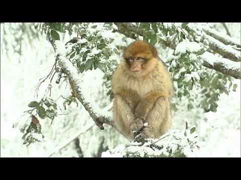 شاهد: تساقط الثلوج الكثيفة في جبال الأطلس المغربية  - نشر قبل 53 دقيقة