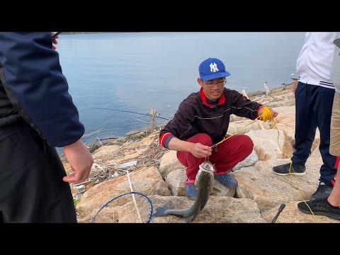 Cách câu cá vược và cá tráp ở cửa biển bằng mồi trùng biển ( hà đỏ )