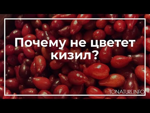 Почему не цветет кизил? | toNature.Info