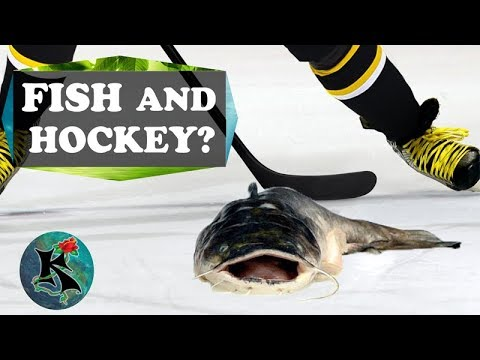 Fish Thrown On Ice At HOCKEY Games!? NHL Playoffs | Koaw Nature