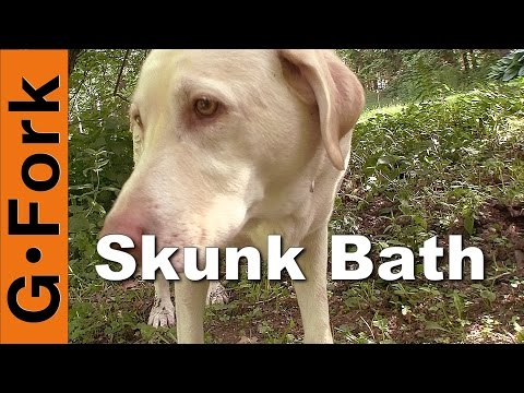 How To Make Your Dog S Breath Stop Smelling Bad