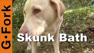 Remove Skunk Smell On Your Dog - GardenFork.TV