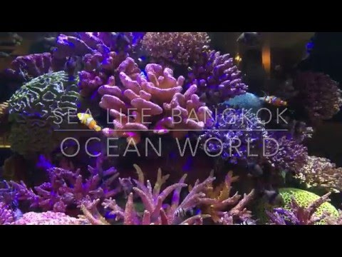 SEA LIFE Bangkok Ocean World | Thailand | Chasingwinter.co.uk