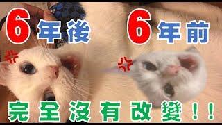 【豆漿 - SoybeanMilk】超珍貴影片!三個月小豆漿登場!