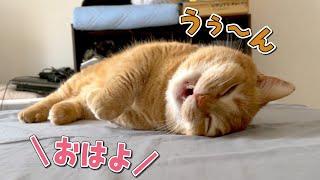 爆睡中の猫に「おはよう」と声をかけたときの反応が可愛すぎた!