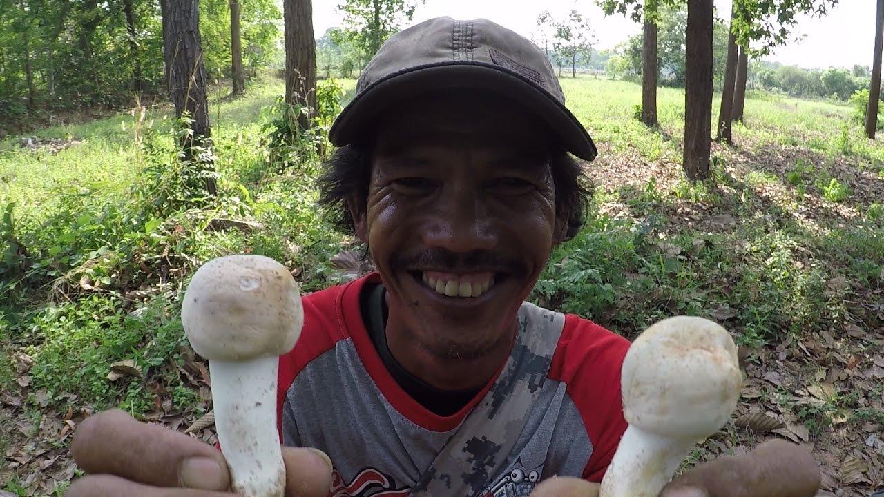 เข้าป่าหาเก็บเห็ดไค นำมาทำอาหารพื้นบ้านของคนอีสาน หาอยู่หากินแบบวิถีอีสาน