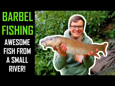 BARBEL FISHING| Catching QUALITY FISH From A YORKSHIRE River + Rigs And Bait