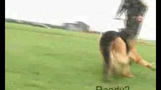 Raf Dog Jasper In Action (lincolnshire Echo)
