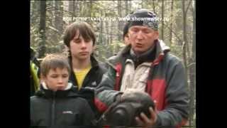 видео Экспедиции уходят на Аляску
