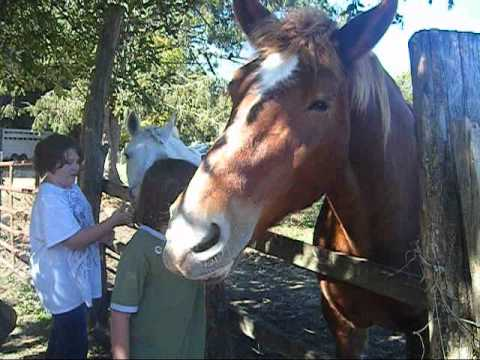Horse Rabies - YouTube