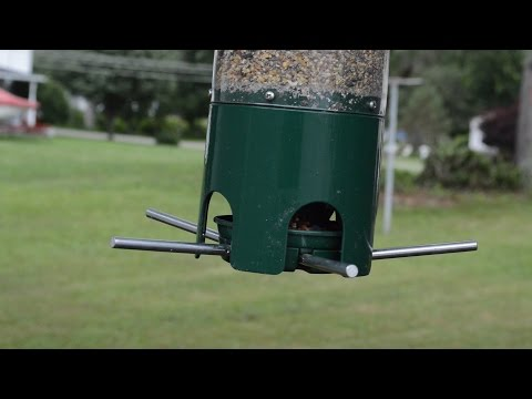 New! Keep Squirrels Out Of Your Bird Seed With This Feeder