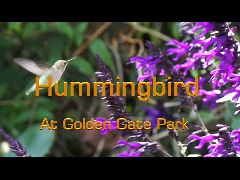 Hummingbird At Golden