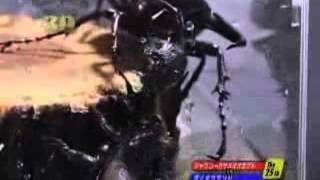 Жук-геркулес против скорпиона