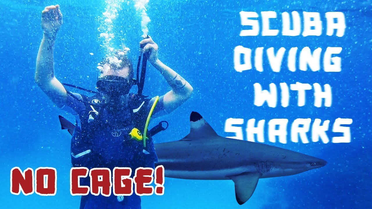 Scuba Diving With Sharks! (NO CAGE)