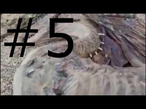 #5 penampakan naga nyata di dunia