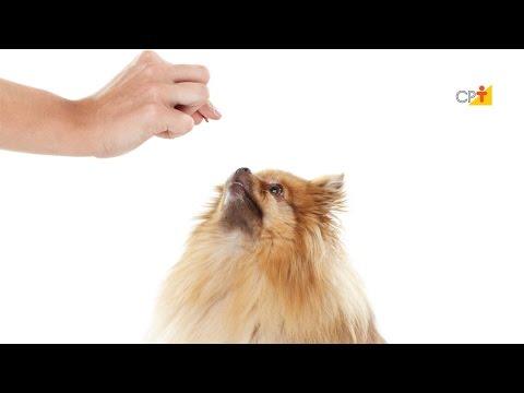 Curso CPT Adestramento de Cães