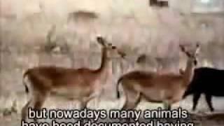 GAY ANIMALS . ANIMALES GAY . Homosexuality Is NATURAL. La Homosexualidad Es Natural