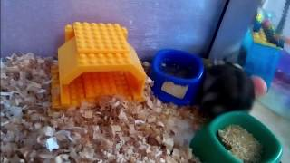 Лего домик для хомяка (Lego house for hamster)
