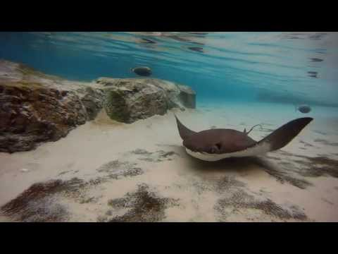 Swimming With Sting Rays At Discovery Cove Orlando Florida!!!