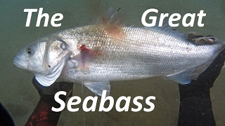 Spearfishing | The GREAT SEA BASS rollergun - Ψαροντούφεκο για μεγάλα λαβράκια ✅