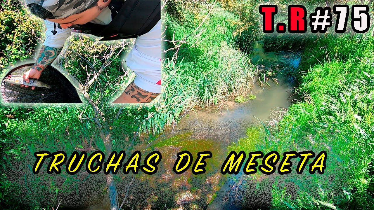 TRUCHAS DE MESETA (temporada 2020) 🐟