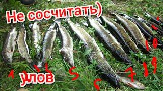 Рыбалка на спиннинг/Щука ушла/Река/Собака в воде/Лодка.