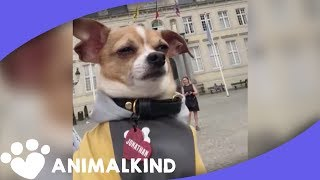 Jet-setting Chihuahua is #travelgoals | Animalkind