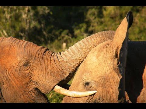 Addo Elephant National Park with Nelson Mandela Bay Tourism