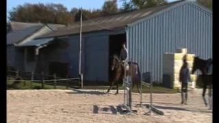 Cheval complet à vendre 8ans (Dressage, Obstacle, Cross)