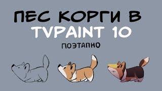 АНИМАЦИЯ КОРГИ для #cheesechallenge в TVpaint 10 [процесс анимации]   JUMPING DOG ANIMATION PROCESS