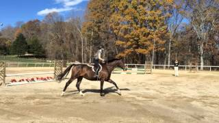 Sweet Briar Open house riding 11-16-15