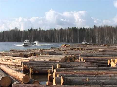 трелёвка леса на мтз 82 1 - YouTube