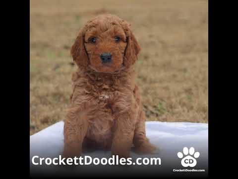 Crockett Doodles colors | FunnyDog TV