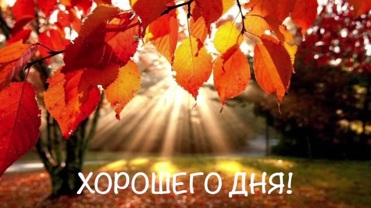 Beautiful Fall Scenery Wallpaper Видеопожелание видео открытка с добрым утром Красивое