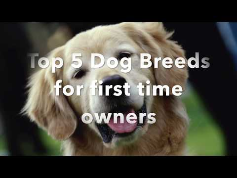 Top 5 Dog Breeds For First Time Owners