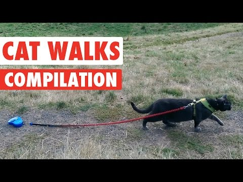 Funny Catwalk Cats Walking Video Compilation 2016