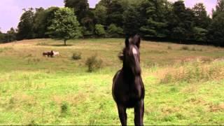 Черный красавец - Трейлер