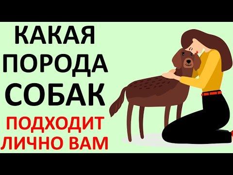 ТЕСТ! КАКАЯ Собака ПОДХОДИТ Именно ВАМ