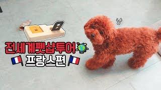 전세계펫샵투어 프랑스편!🌏 지상 최고 난이도의 강아지 퍼즐과 반전