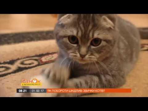 Вопрос: Как сделать так, чтобы кот не царапал стены, мебель и не делал метки?