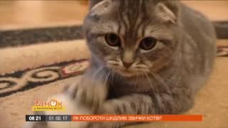 видео Какие запахи не любят кошки и как отбить их вредные привычки?