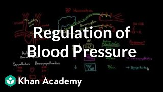 Regulation of blood pressure with baroreceptors
