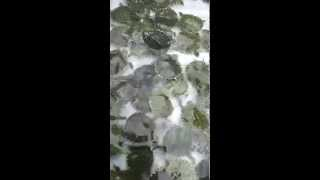 Yellow-Bellied Slider Hatchlings by David Barkasy