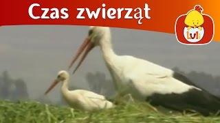 Czas zwierząt - Bocian + Jeż, dla dzieci Luli TV - Videos for babies