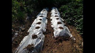 김장배추 씨앗 파종 적기와 파종하는 방법