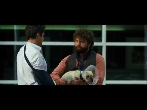 Due Date {2010} - Spitting On The Dog