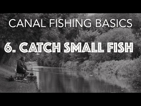 How To Catch Small Canal Fish