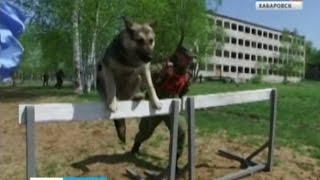 Вести-Хабаровск. Лучшую служебную собаку выбрали в Восточном военном округе